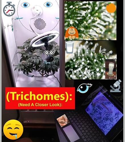 Trichomes_~~