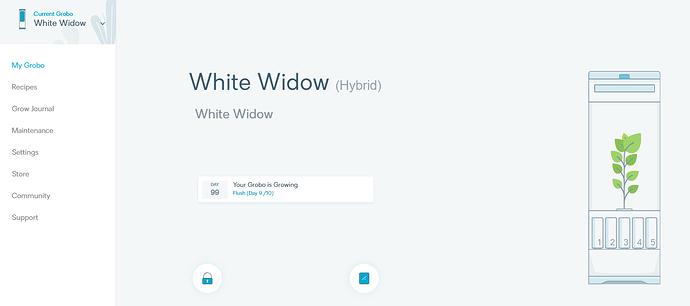 WhiteWidowHarvest