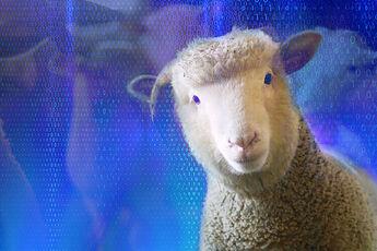 Sheep..~~