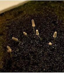 Mushroom_Looking..~~ (2)