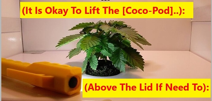 LiftCoco-Pod..1~~