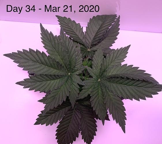 2020-03-21 19.17.37-1