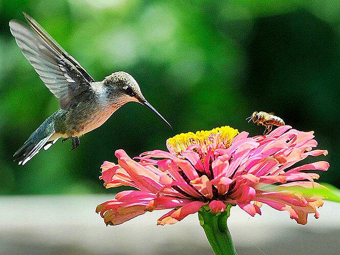 Birds&Bees..1~~