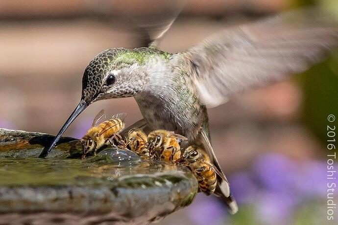 Birds&Bees..1a~~