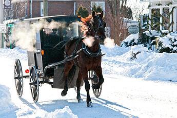 HorseAndBuggie..~~