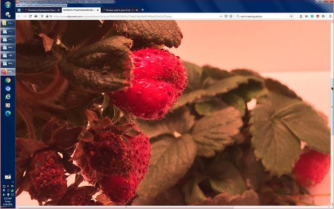 StrawberryBjorn..--