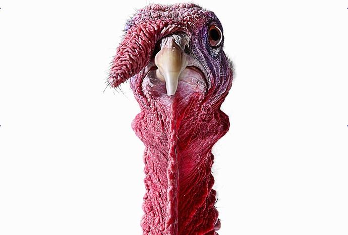 TurkeyDay..1c~~