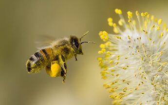 Pollinate..1~~