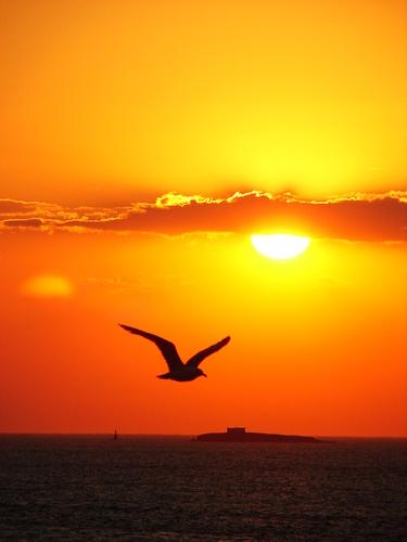~~freedom.free.sunset.beautiful..-