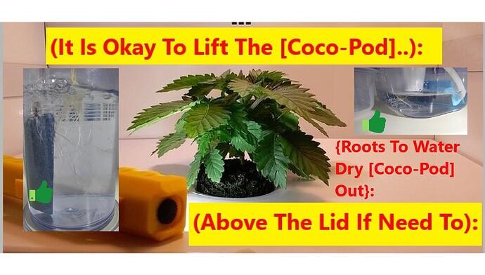 LiftCoco-Pod..1a~~