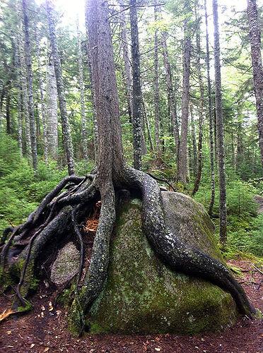 RootsWrap..~~