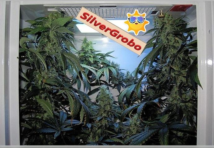 SilverGroboColas..1~~