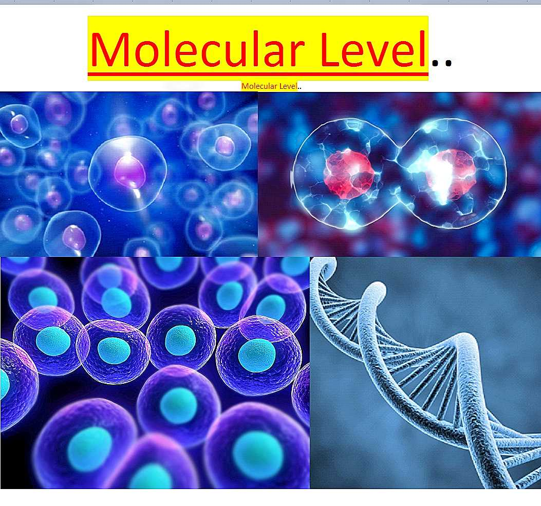 ~@MolecularLevel..--