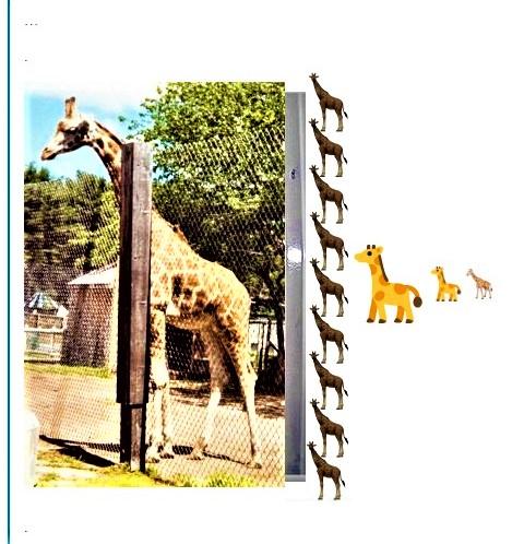 Tall_Giraffe..~~ (3)