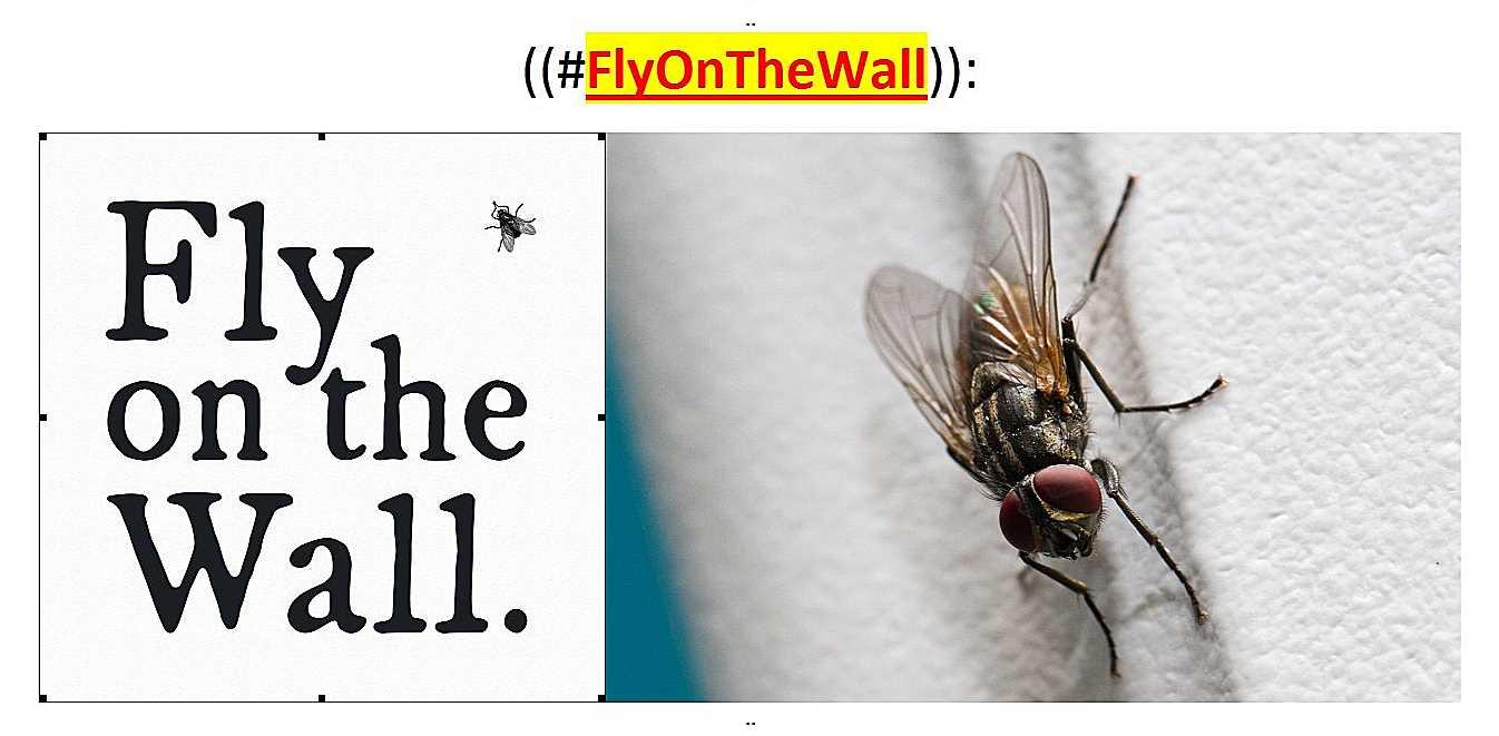 ~@FlyOnWall..--